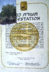 YV Diploma and the photo of a tree in Yad Vashem